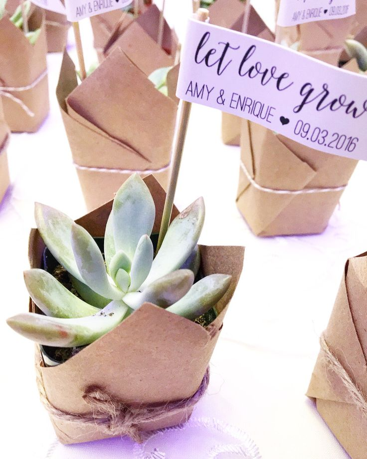 """Let Love Grow"" Succulent Wedding Favors 