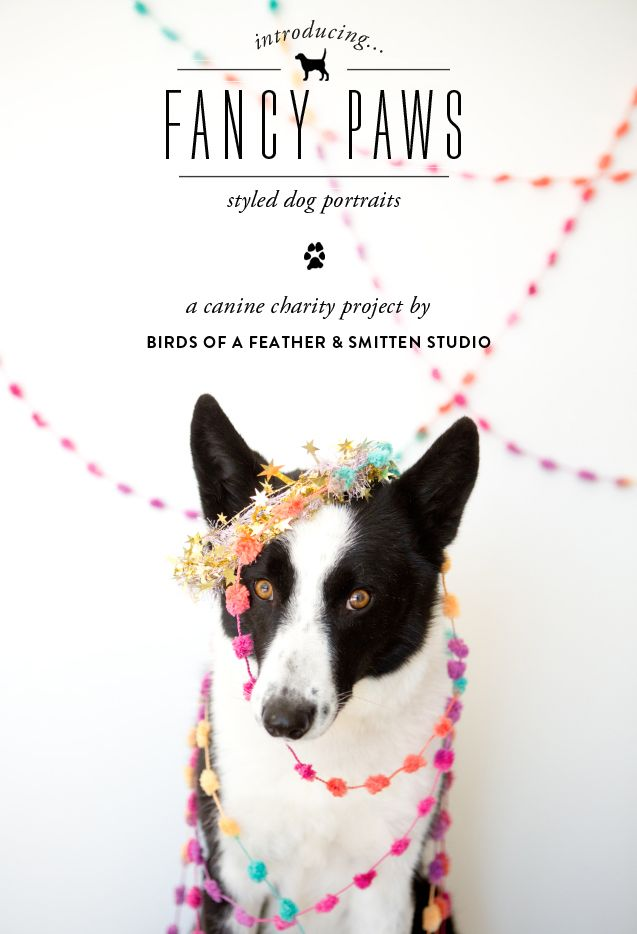 adorable photo + a great charity | fancy paws // birds of a feather + smitten studio