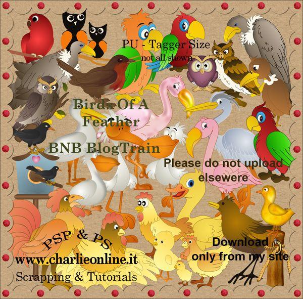 ch-Sept2015-BirdsFeatherBNB