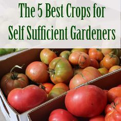 September is National Preparedness Month, let's learn about the 5 Best Crops for Self Sufficient Gardeners, Potatoes, Tomatoes, popcorn, Squash and Kale.