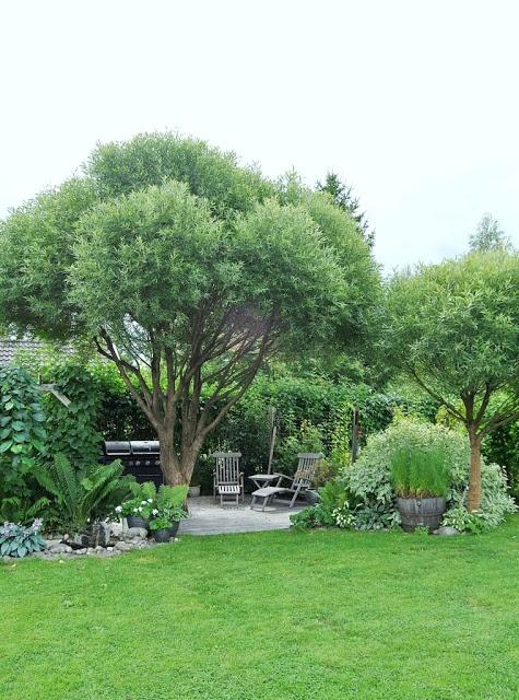 HANNAS: trädgård-perfect tree for blue bottles.