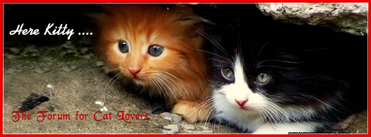 Here Kitty, new forum for cat lovers!
