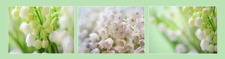 Lilies Of The Valley. Triptych by Jenny Rainbow
