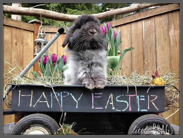 Little Brags: Our Real Easter Bunny, An Impostor And Just Plain Cuteness