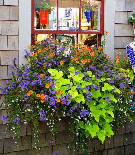 Pot de fleurs suspendue sur le bord d'une fenêtre qui embellie la maison et l'extérieur de celle-ci.