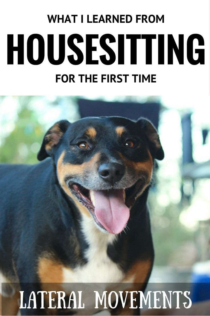 Housesitting in Australia is a great way to cuddle some cute pets and save on accommodation - but there are some things to consider first. #housesit #australia #pets #dog