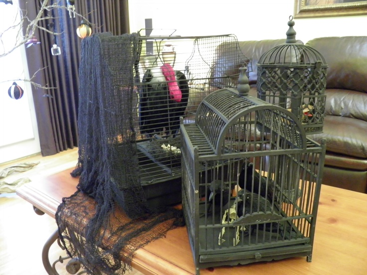 Halloween idea:  These bird cages, from local yard sales and flea markets, create a frightful coffee table display.