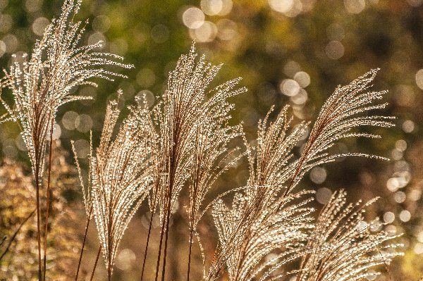 You may have heard the term depth of field (DoF), but if you are new to photography you may not yet be taking advantage of how DoF can enhance your photos. A basic definition of depth of field is: the zone of acceptable sharpness within a photo that will appear in focus. In every picture …