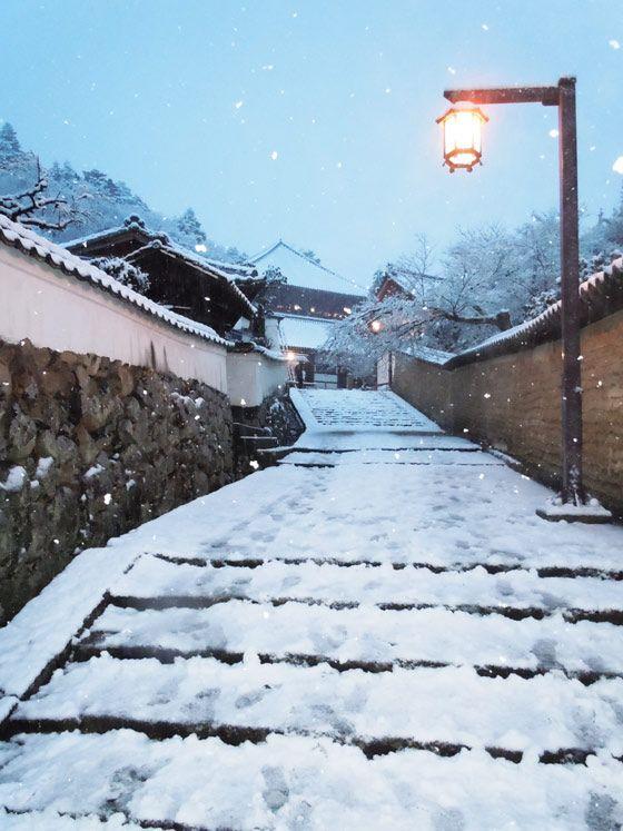 雪の東大寺 裏参道 | なら散策日記【鹿と亀と猫と犬の日々】