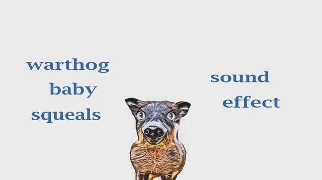 Pin Do A John Tramp Em The Animal Sounds Animation Funny Animal Videos Animals E List Of Animals