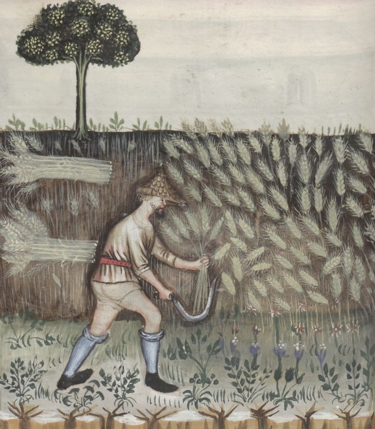 A farmer cuts wheat with a sickle - Siligo | Österreichische Nationalbibliothek - Austrian National Library | Public Domain