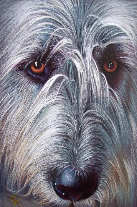 """Beautiful Irish Wolfhound drawing - Elena Kolotusha. Looks similar to Chewy except his coloring is more variable (silver, charcoal & bronze,) his eyes are   softer & sweeter, and his hair looks more """"wirey"""", (it only has this soft appearance right after brushing)."""