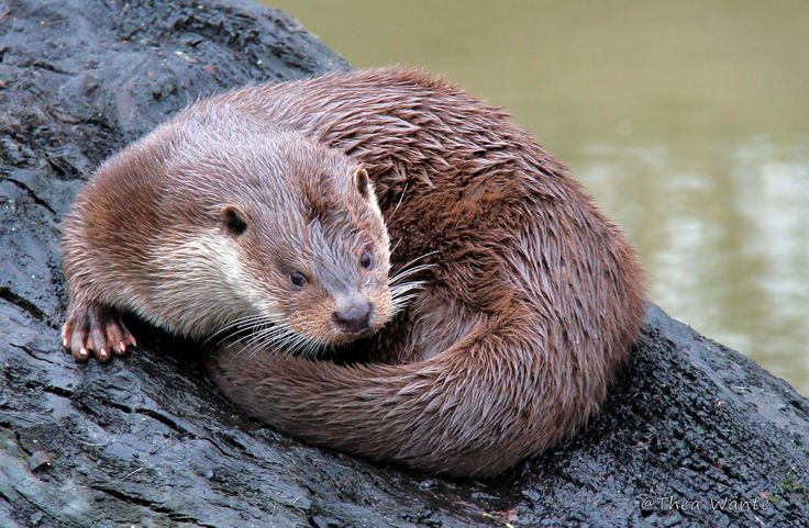 2017-03-03 - otter pic: Full HD Pictures, #1968576
