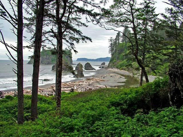 Olympic National Park is located in the U.S. state of Washington, in the Olympic Peninsula. The park can be divided into four basic regions: the Pacific coastline, alpine areas, the west side temperate rainforest and the forests of the drier east side. U.S. President Theodore Roosevelt originally created Mount Olympus National Monument in 1909[3] and after Congress voted to authorize a re-designation to National Park status, President Franklin Roosevelt signed the legislation June 29, 1938.