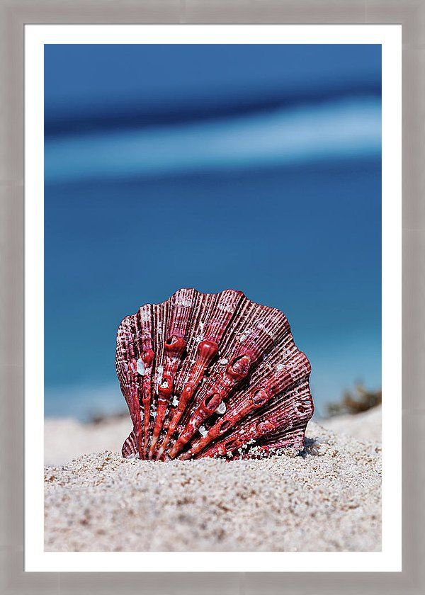 Tropical Landscape Framed Print featuring the photograph Sand And Shell by Evgeniya Lystsova. Sea shell on a tropical sandy beach with blue sea in Cancun, Mexico vacation concept. Inspiring Wall Art for your Home Decor and Interior Design. Bring your print to life with hundreds of different frame and mat combinations. #Shell #Beach #Coastal #Prints #FramedPrints #HomeDecor