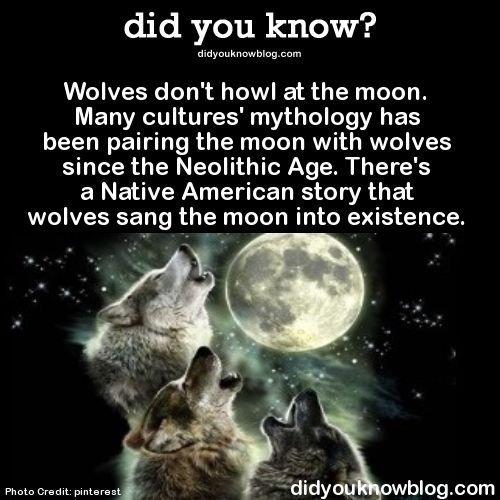 Wolves don't howl at the moon. Many cultures' mythology has been pairing the moon with wolves since the Neolithic Age. There's a Native American story that wolves sang the moon into existence. Source