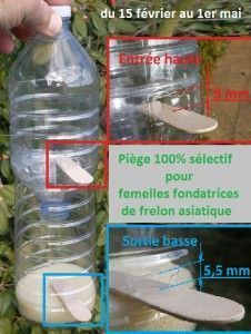 Piège anti frelon asiatiques 100% sélectif du 15 fev au 1er mai