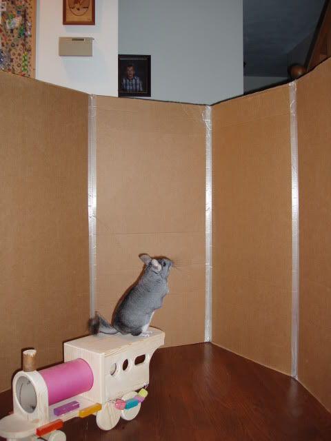 Cardboard playpen - Chins & Hedgies