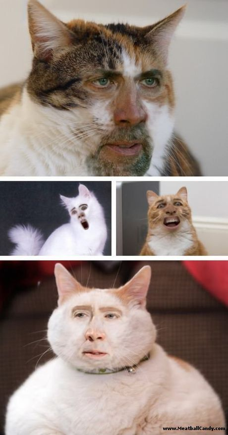 Nicholas Cage as a cat...ANDPOP Terrifying Face Swaps ...