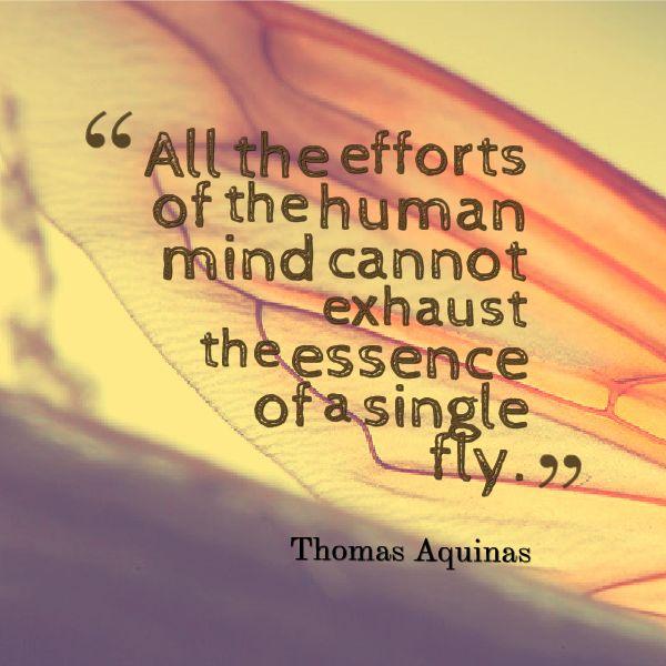 Thomas Aquinas Quotes - QuotesGeek
