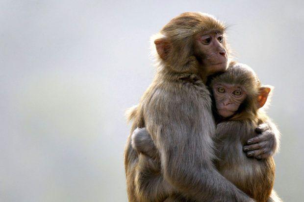 Taferelen van moeder en kind zorgen ook bij de dieren voor liefelijke beelden op deze Moederdag.