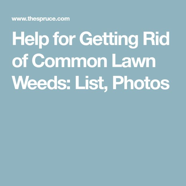 Help for Getting Rid of Common Lawn Weeds: List, Photos
