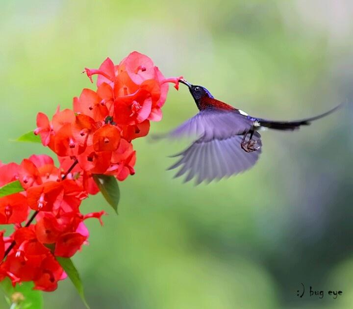 By Bug Eye On Background Flowers Hummingbird For Bryan