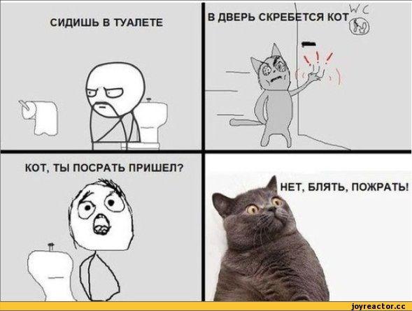 Картинки мемы про котов