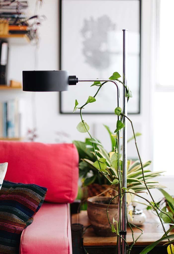 Zimmerpflanzen Hauptarten und Tipps zum Dekorieren mit Fotos