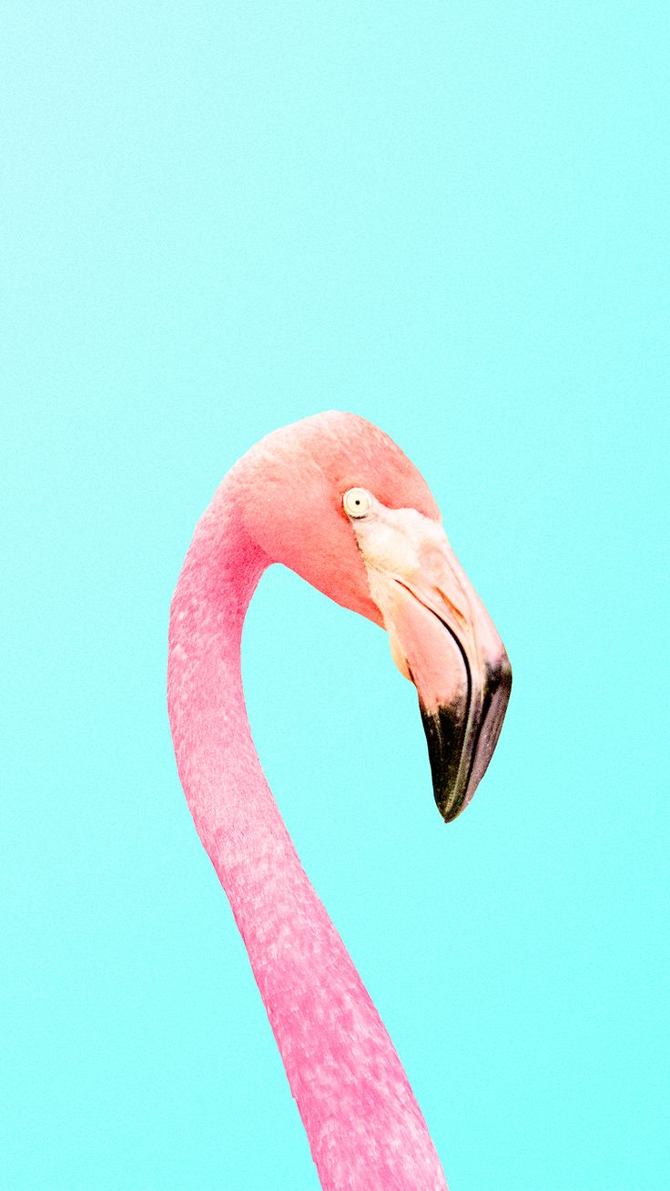 Background flamingo flamingos iphone wallpaper wallpaper - Download Your Favorite Candyminimal Wallpapers To Your Phone