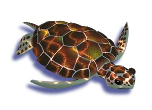 Like all sea turtles, the loggerhead can see well underwater and is believed to have an acute sense of smell