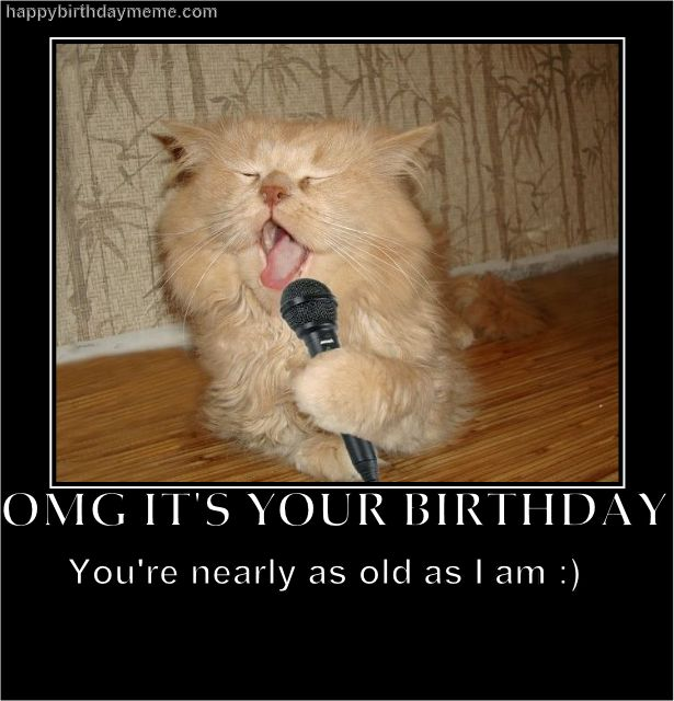 0150a304723a086283db8ca44fcc18ff birthday cats happy birthday 15 best birthday images on pinterest birthday greetings,Singing Happy Birthday Meme