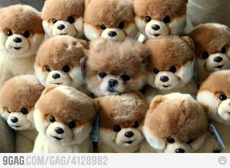 Camouflage Level: Boo: Dogs Pics, Cutest Dogs, Boo Dogs, The Real, Funny Pictures, Teddy Bears, Baby Animal, Dogs Pictures, Stuffed Animal