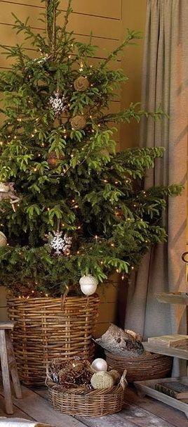 living Christmas tree in basket