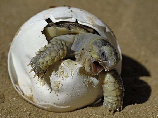 welcome little one!: Rawr, Giggle, Animals, Funny Stuff, Funnies, Things, Smile, Baby Turtles