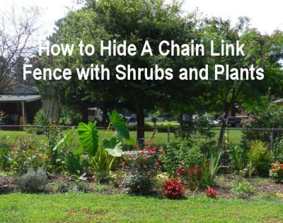 How To Hide A Chain Link Fence With Shrubs And Plants