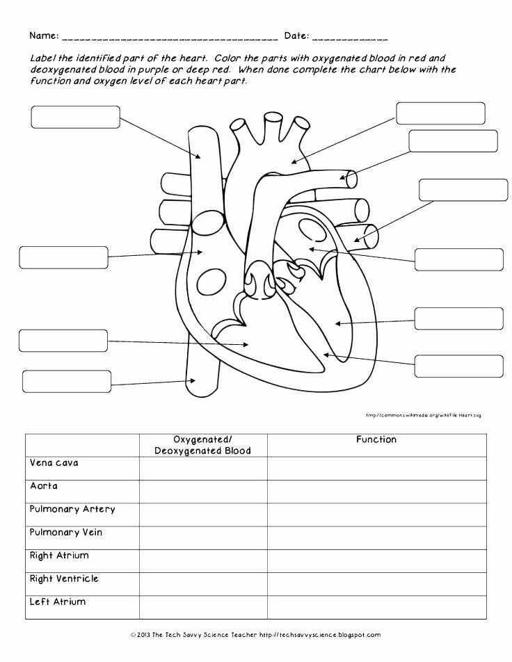 Blank Heart Diagram Worksheet Manual Guide