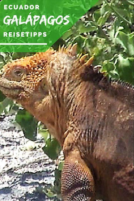 Galapagos Inseln: Viva la Evolución |Reisetipps für den perfekten Urlaub | Tierfotos | Hoteltipps |Reiseplanung #Galapagos #Inseln #Tiere #Schildkröten