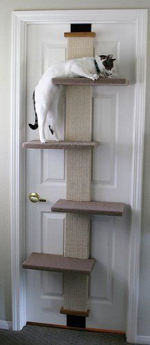 Back-of-Door Cat Climber   Portable Cat Tower for Apartment Dwellers