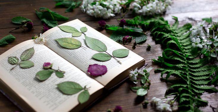 Ядовитые растения, растущие в России, и последствия, которые сулит встреча с ними