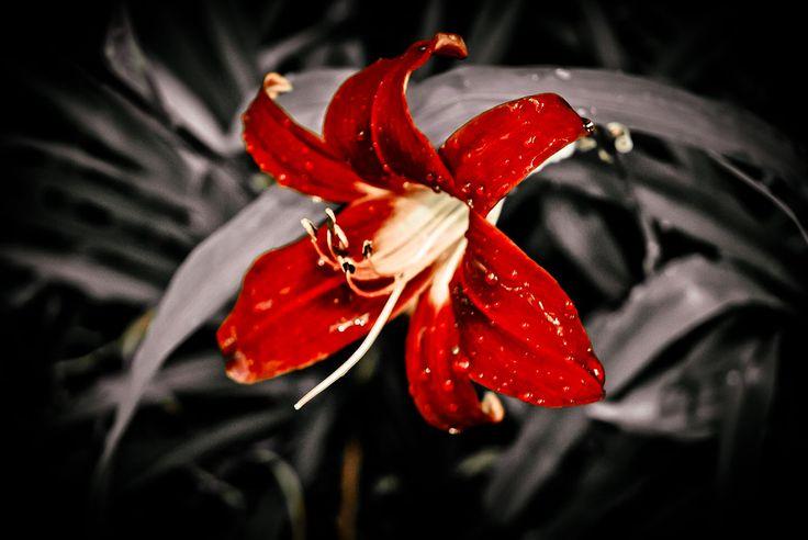 #Flower @ #Madeira