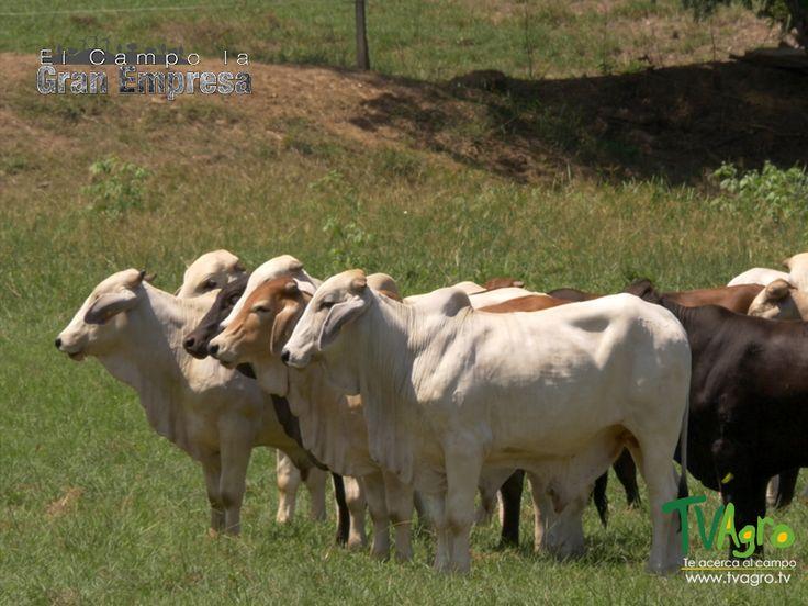 El Campo La Gran Empresa: Sales Mineralizadas y Complementos Proteínicos para el ganado