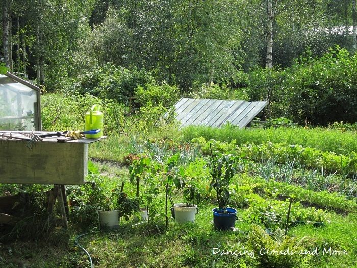 Sunny day in vegetablefield.