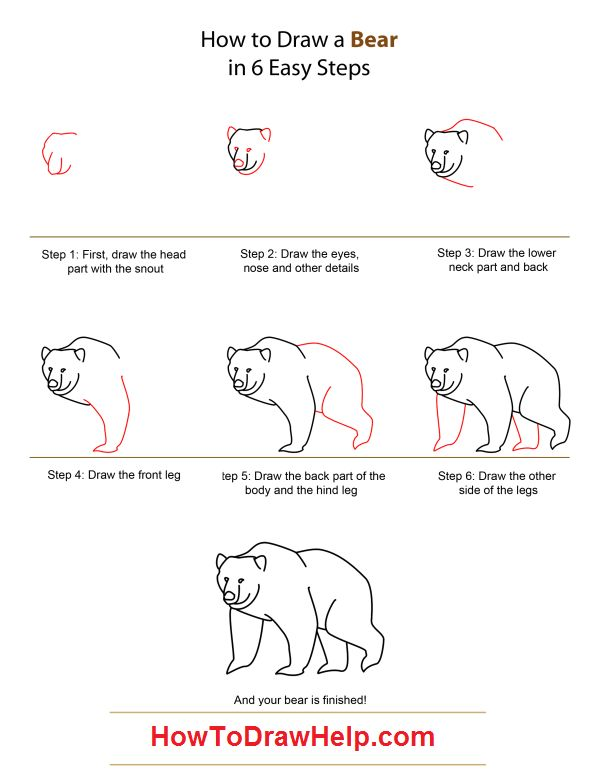 Learn how to draw a Bear - Step by Step Tutorial for Kids