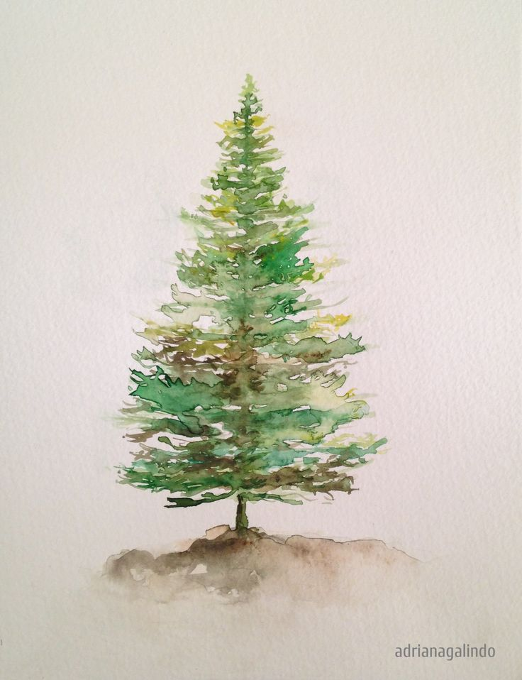 Copyright by Adriana Galindo - Pinheiro, arvore 5 / Pine tree, n. 5,  aquarela / watercolor 21 x 15 cm - 40 trees project By Adriana Galindo - drigalindo1@gmail.com