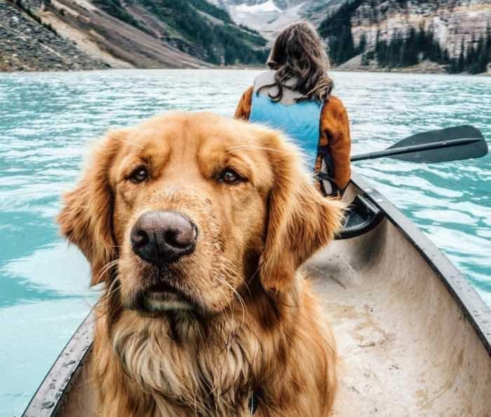 Meet 10 Of The Most Adventurous Dogs On Instagram Dog Instagram