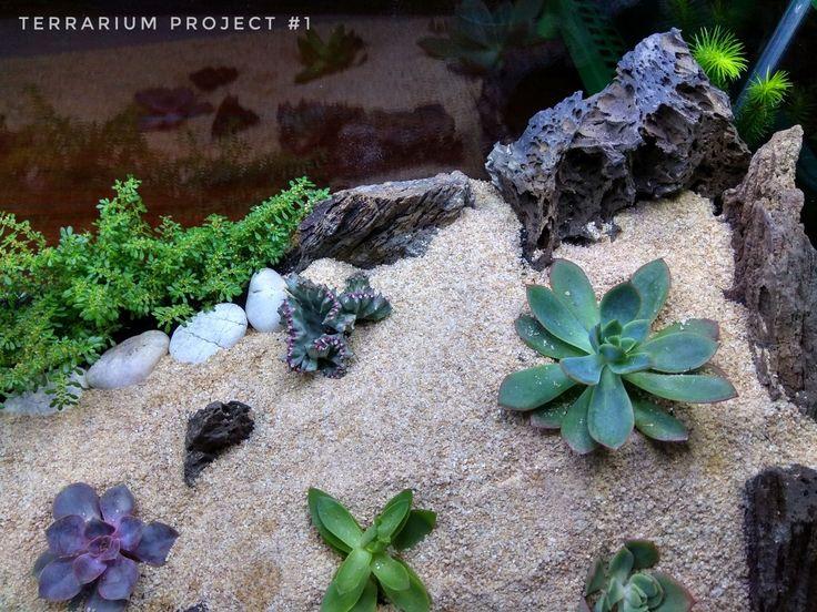 Terrarium Mini Kaktus