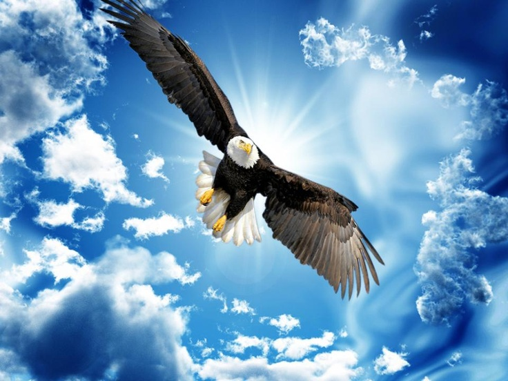Eagle Flying High in the Sky | Eagles | Pinterest | The o ...