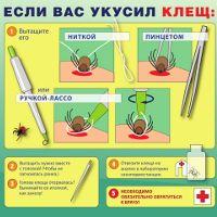 Что делать, если укусит клещ | Милосердие.ru