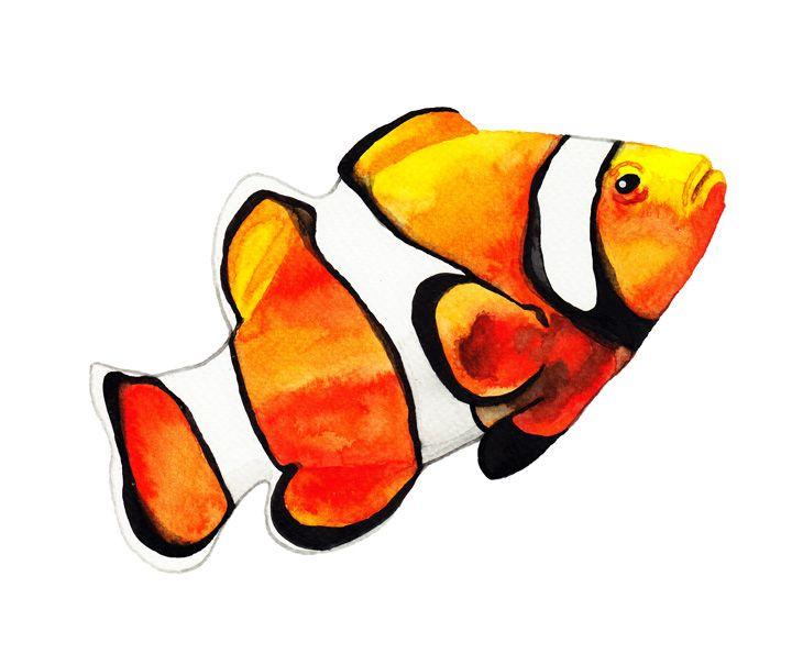 Clownfish Watercolour Painting By Katrina Sophia